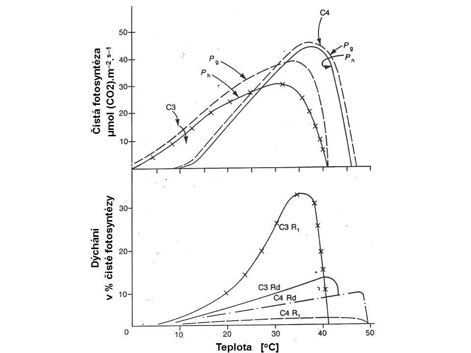 Čistá fotosyntéza μmol (CO2).m–2.s–1 v % čisté fotosyntézy Dýchání Teplota [oC]